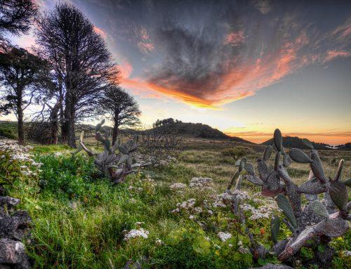Travel | Landscape El Hierro